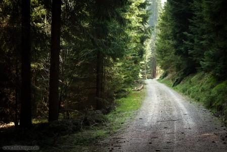 Waldweg im Ottergrund