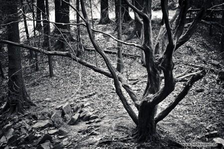 Baum in schwarz/weiß