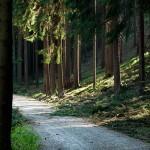 Waldweg 2