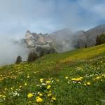 Alpenwise
