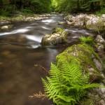 Farn am Flusslauf
