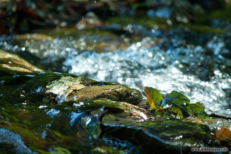 Gefangen im Wasser
