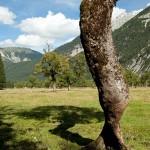verdrehter Baum