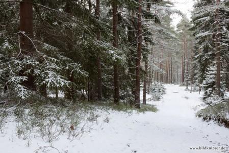 Verschneite Waldwege