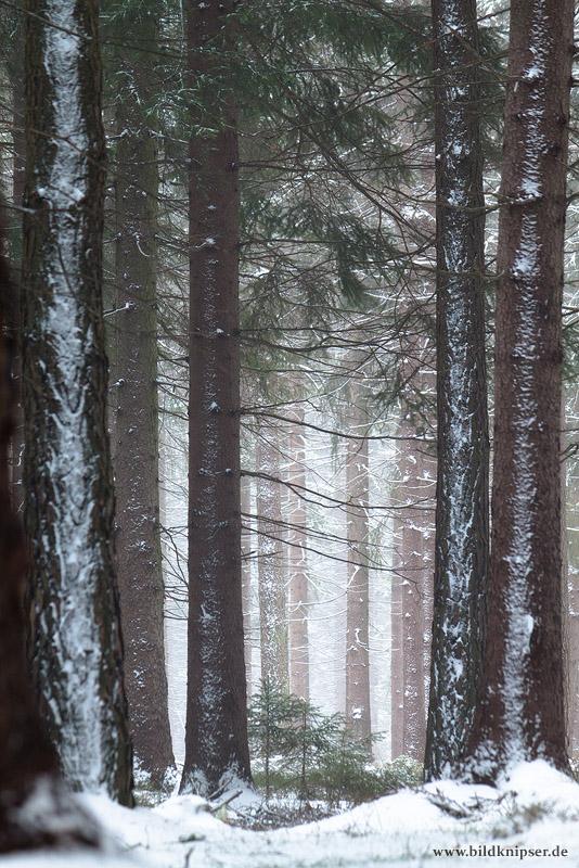 Winterwald 2 - dem Licht nach