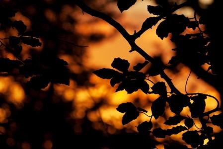 Blätter im Scherenschnitt