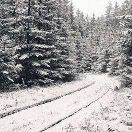 ein Lebenszeichen im Winter