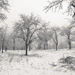 Kirschobstwiese im Winterkleid