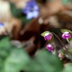 Blütenpracht am Waldboden