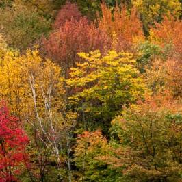 Tipps für gute Herbstbilder