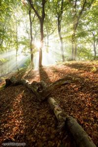 Sonnenstrahlen im Herbstwald