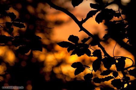Blätter als Scherenschnitt
