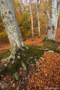 Buchen im Nationalpark Jasmund