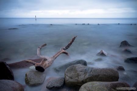 Strandgut in der Ostsee
