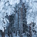 Bild der Woche: Winterimpression aus der Konserve