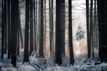 Winterwald Thüringen