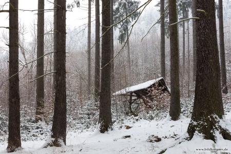 Futterkrippe im Winterwald