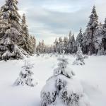 Bild der Woche: Im Winterwald