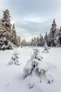 Winterwald am Schneekopf