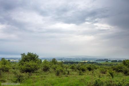 Heidelandschaft am Natinalpark Hainich