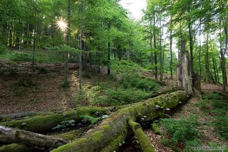 ein alter toter Baum mit Baumpilzen überwachsen