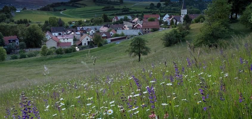 Bild der Woche: Blumenwiese Oberpreilipp
