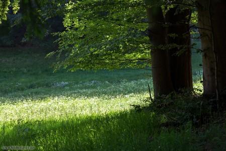 Bäume am Waldrand