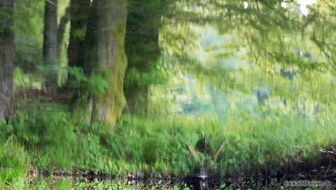 Wasserspiegelung wie ein Gemälde