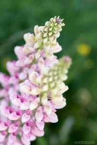 Blüte einer Wildpflanze