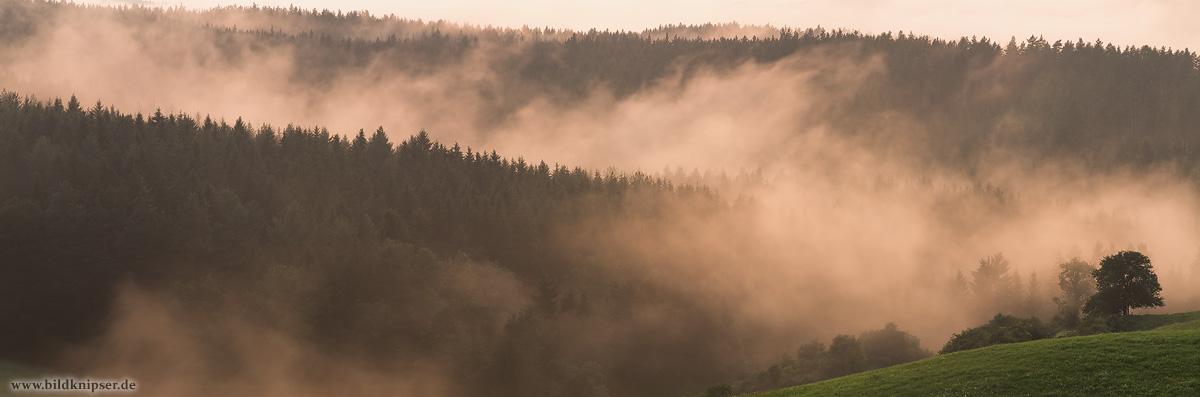 Aufsteigender Nebel nach einem Regenschauer im Thüringer Wald