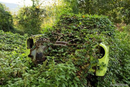 alter Trabbie überwuchert mit Pflanzen