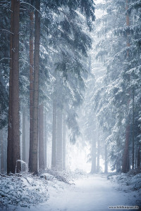 Schnee und Nebel im Wald