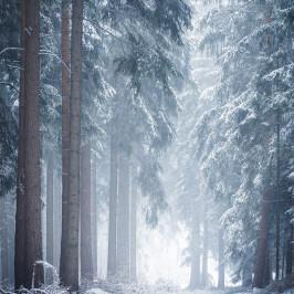Foto des Monats März: Winterwald