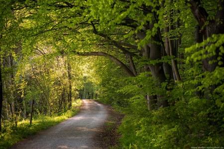 Der Weg in den Nationalpark