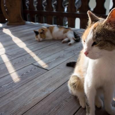einige der Hofkatzen