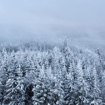 im Winterkleid