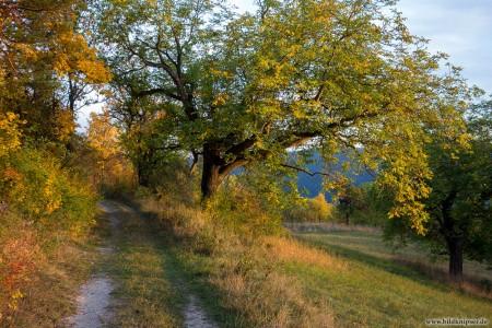 blog_DSC00876_Weg_im_Herbst