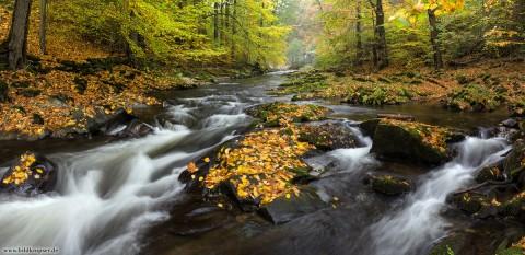 Herbstlaub am Fluss