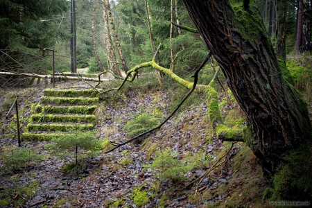 bemosste alte Treppe mit verrostetem Geländer