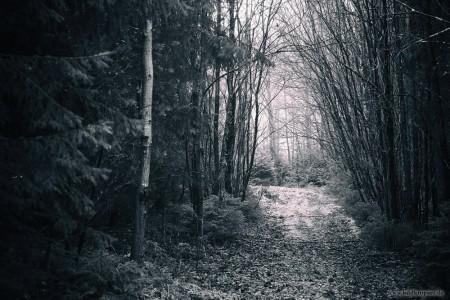 verwachsender mystischer Weg