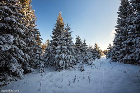 ein verschneiter kleiner Pfad, der zu einer Waldlichtung führt
