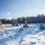 eine Waldlichtung im Winter, die Sonne scheint