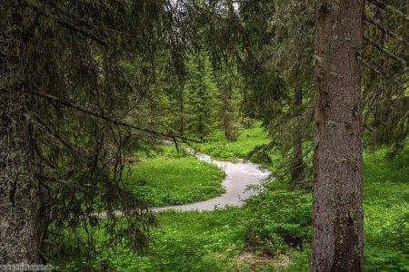 ein durch den regen angeschwollener Bach im Wald
